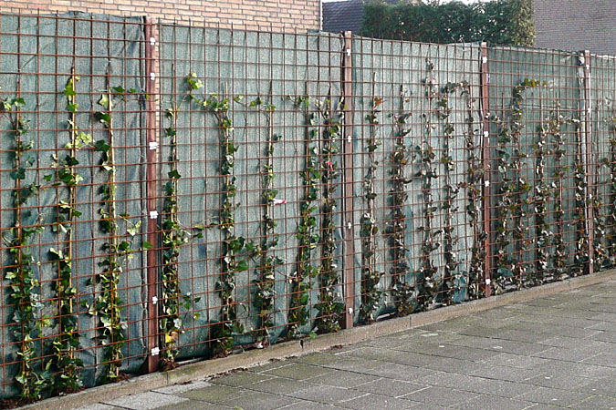 Tuinaanleg erfafscheiding for Grensafscheiding tuin